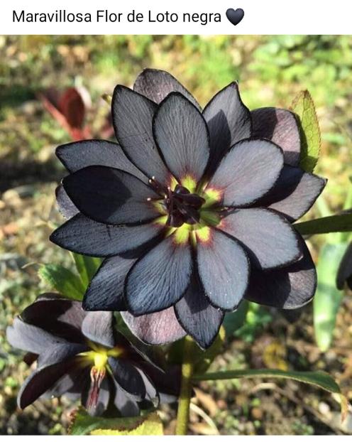 Flores, lindas y originales Scre2790
