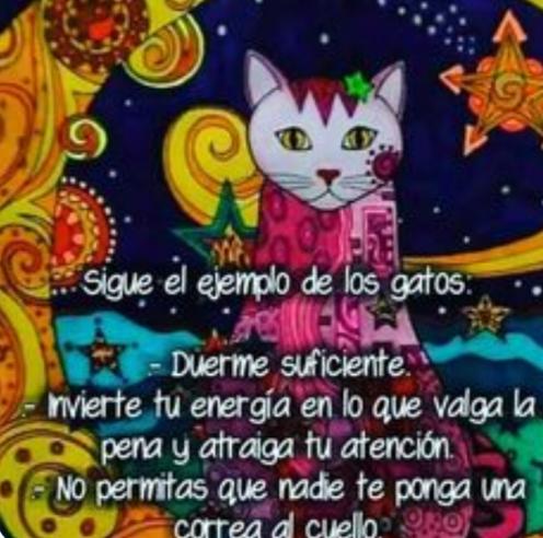 Sigue el ejemplo de los gatos Scre8976
