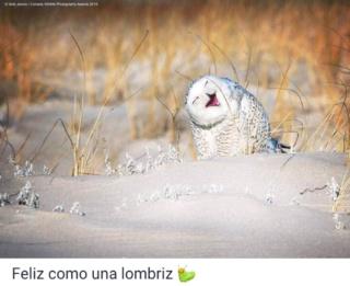 El mundo animal puede llegar a ser muy gracioso (Imágenes) Scree791