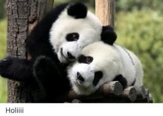 El mundo animal puede llegar a ser muy gracioso (Imágenes) Scree793