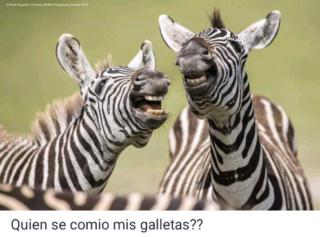 El mundo animal puede llegar a ser muy gracioso (Imágenes) Scree794