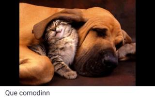 El mundo animal puede llegar a ser muy gracioso (Imágenes) Scree800