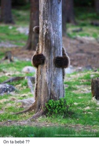 El mundo animal puede llegar a ser muy gracioso (Imágenes) Scree801