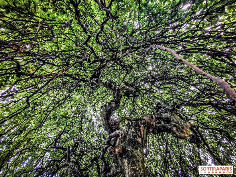 Les arbres admirables du domaine de Versailles 49062710