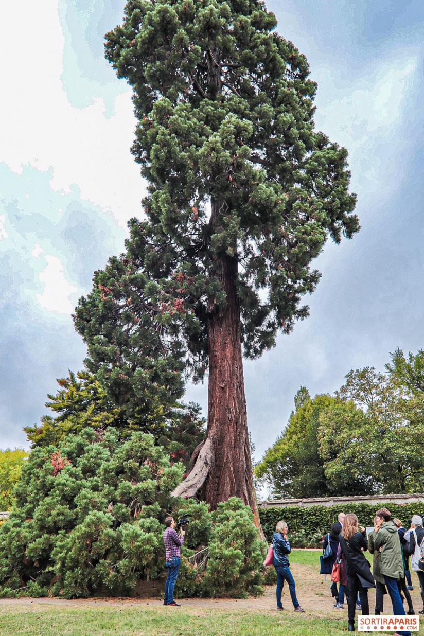 Les arbres admirables du domaine de Versailles 49066310