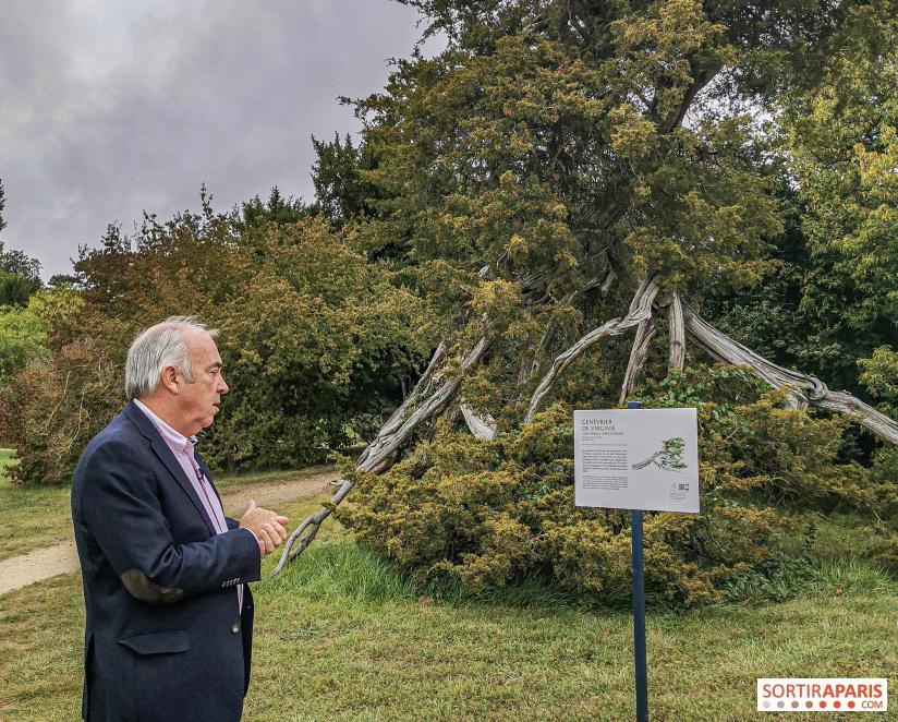 Les arbres admirables du domaine de Versailles 49069610