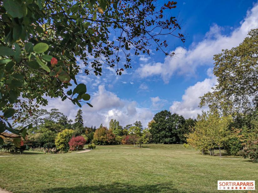 Les arbres admirables du domaine de Versailles 49072610