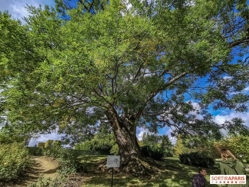 Les arbres admirables du domaine de Versailles 49073510