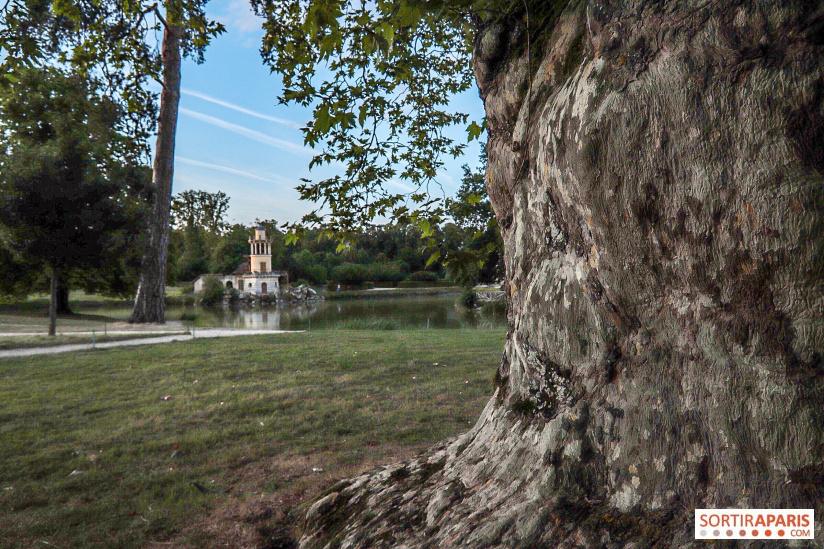 Les arbres admirables du domaine de Versailles 49103810