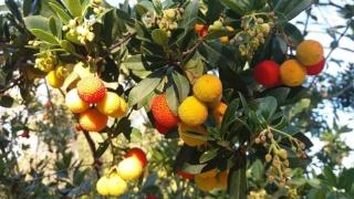 Le Paradis promis dans la Bible Fruits10