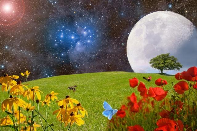 Apocalypse 14 : 7 : Adorez le Créateur car l'heure de son jugement est venue Meadow10