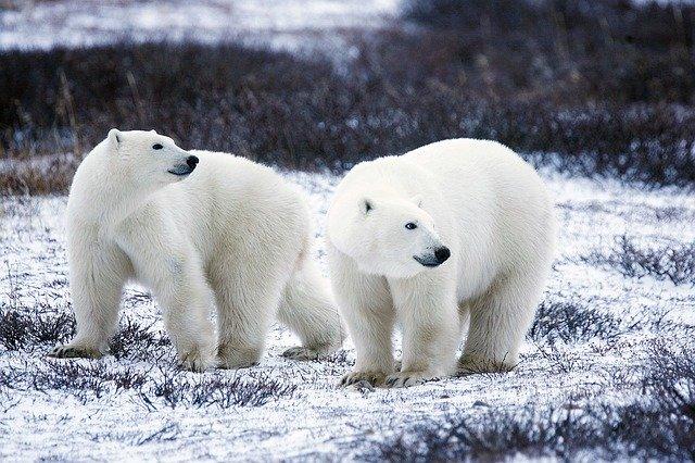 B - Blanc -  Polar-10