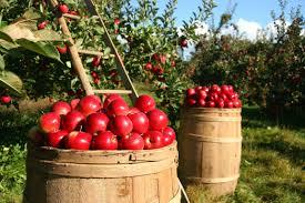 Le Paradis promis dans la Bible Pommes11