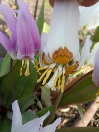 Весна идет!!! - Страница 10 Img_2019