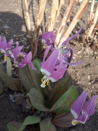 Весна идет!!! - Страница 10 Img_2023