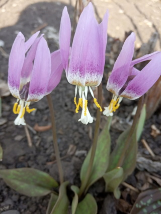 Весна идет!!! - Страница 10 Img_2025