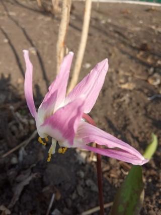 Весна идет!!! - Страница 10 Img_2027