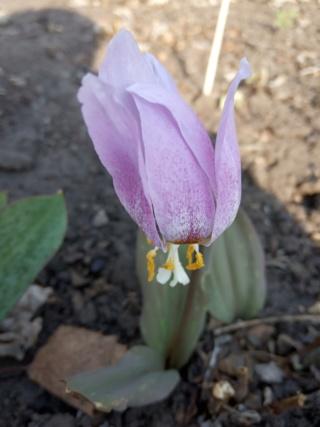 Весна идет!!! - Страница 10 Img_2028