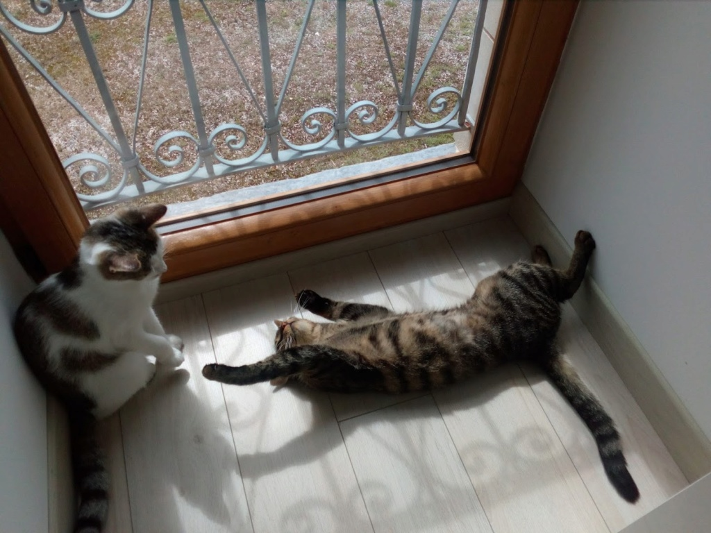 Olympe femelle tabby et blanche née le 04 avril 2017 - Page 4 Img_2022