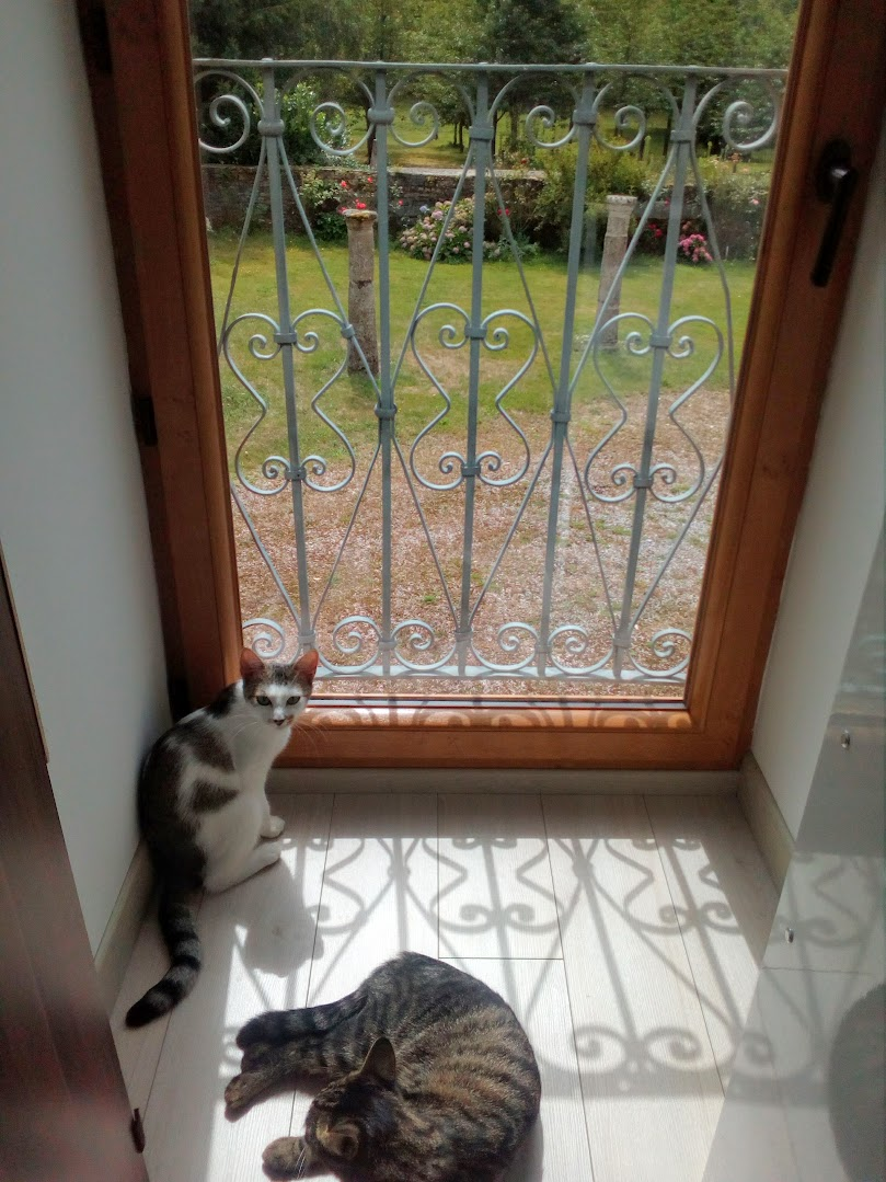 Olympe femelle tabby et blanche née le 04 avril 2017 - Page 4 Img_2023