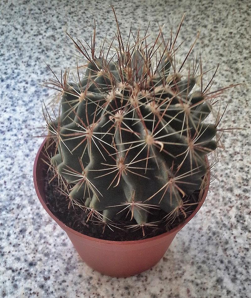 My Cacti..   20190311
