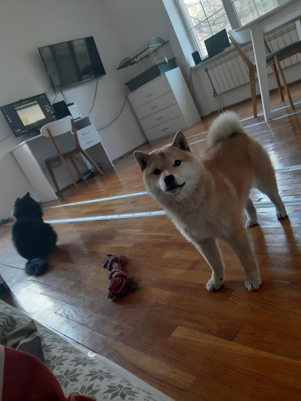 Линька у собаки - Страница 2 15653410