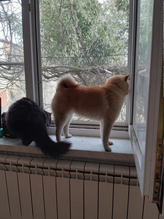 Вес щенка - Страница 12 20190310