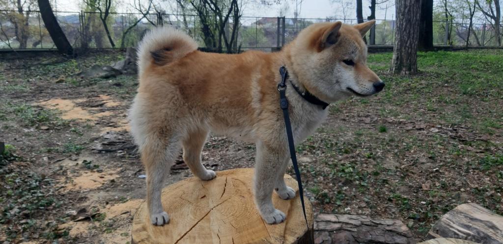 Вес щенка - Страница 12 20190410