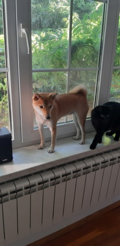 Линька у собаки - Страница 2 20190811