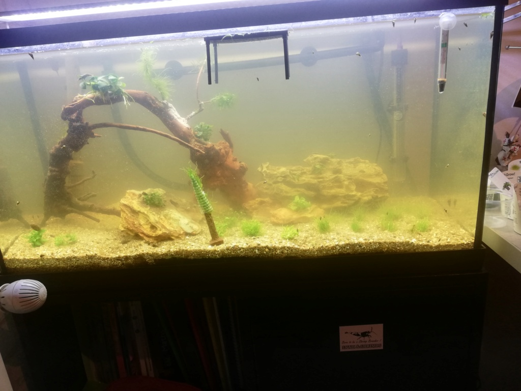 Problème grave dans mon 80 litres - Page 2 Aqua_a10