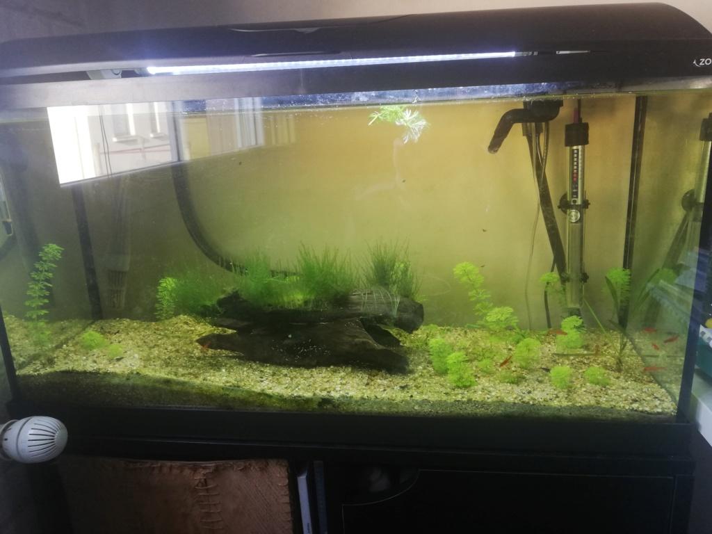 Quel corydoras est le mieux adapté pour mon aquarium ? Img_2023