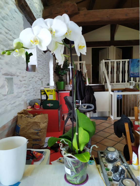 Orchidée 15815210