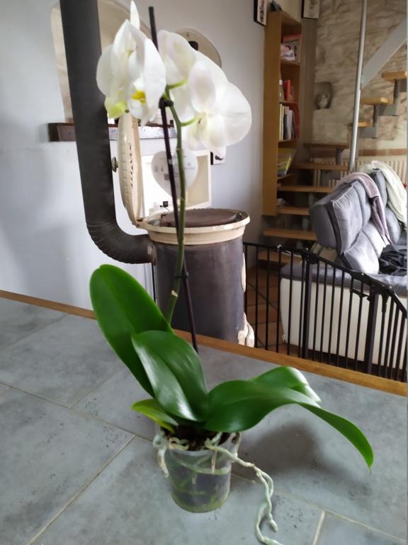 Orchidée Img_2011