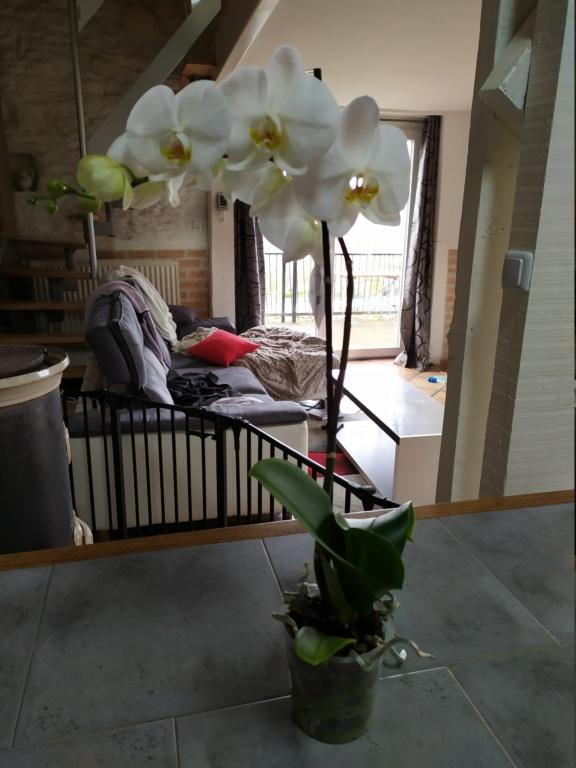 Orchidée Img_2012