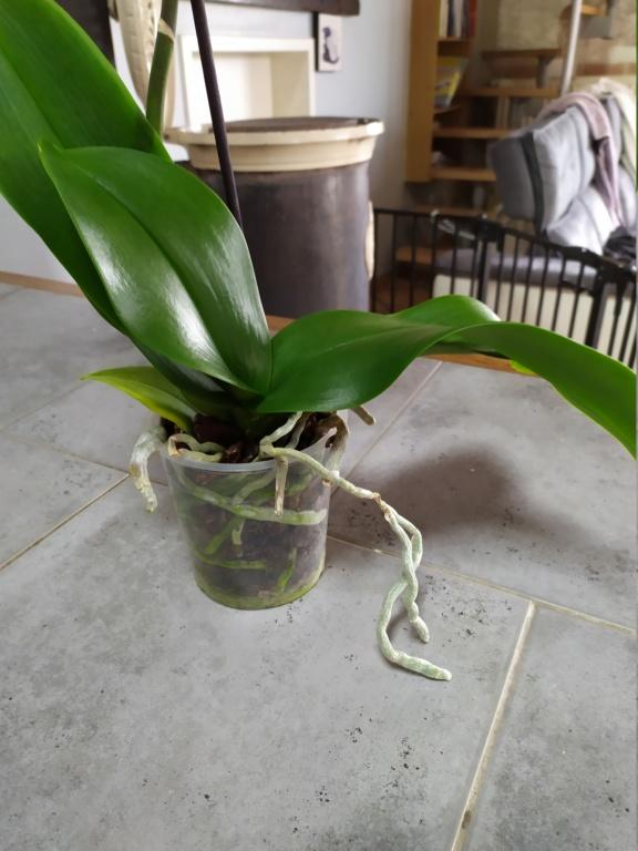 Orchidée Img_2013