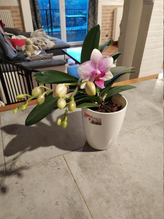 Bourgeons de mon orchidée Img_2015