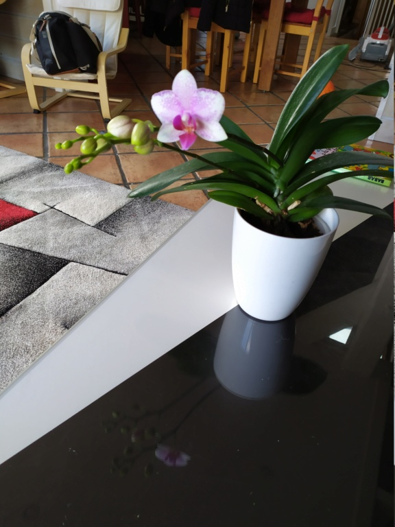 Variété orchidée Img_2017
