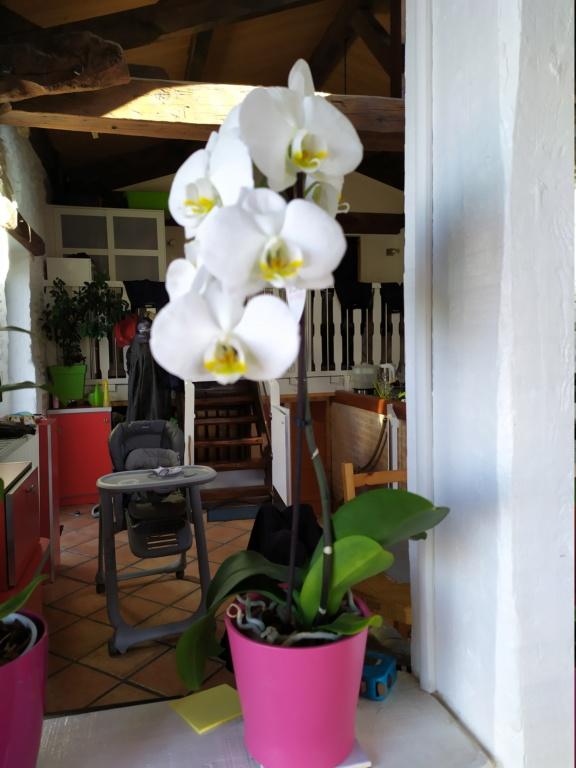 Variété orchidée Img_2036
