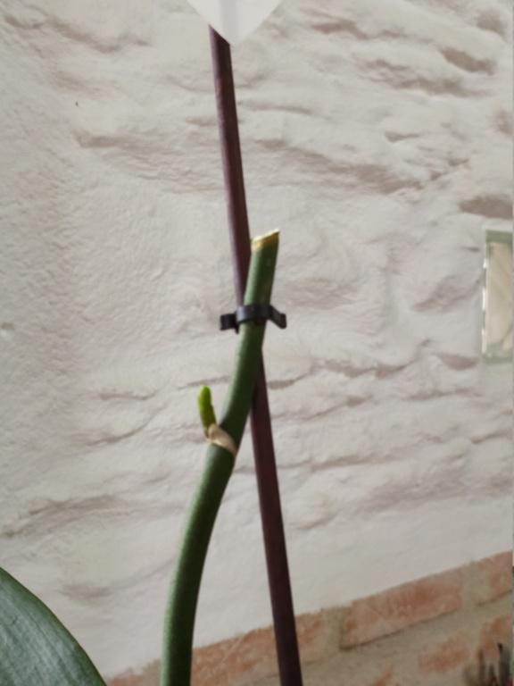 Futur hampe fleural Img_2098