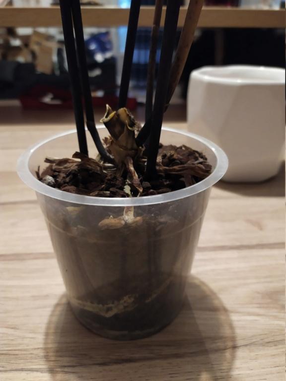 Orchidée pas en forme  Img_2104