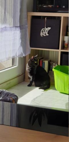 MISS MOUCHETTE 27/02/21 en accueil en vue d'adoption 20210319