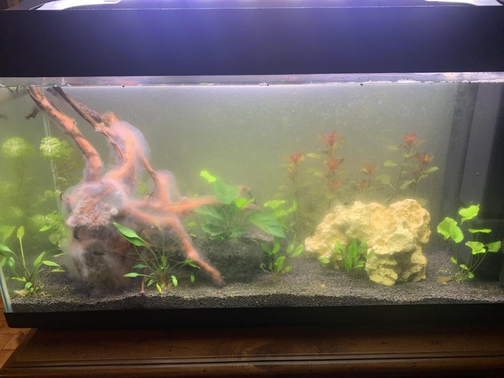 Meuble aquarium 100L 7b9f6f10
