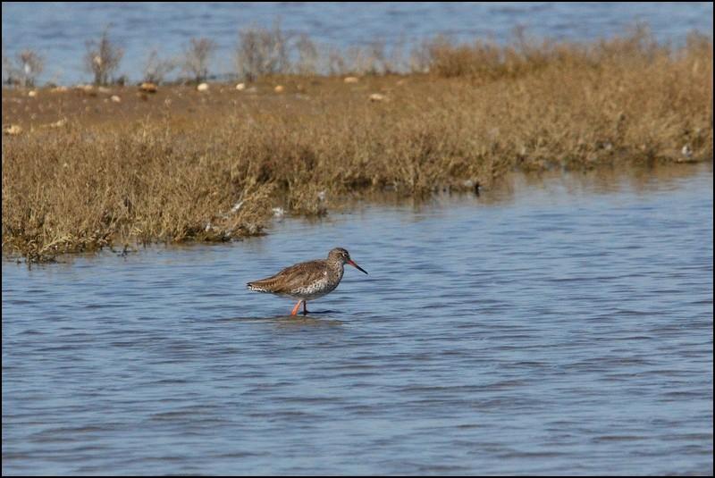 Parc ornitho du Teich (le 10 mars 2013) Cheval10