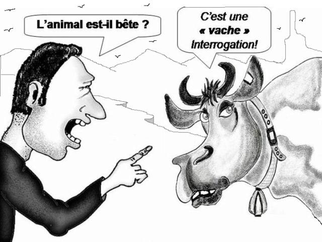 oscar dessins 2017-2018 (forum réac)  - Page 5 Vache_10