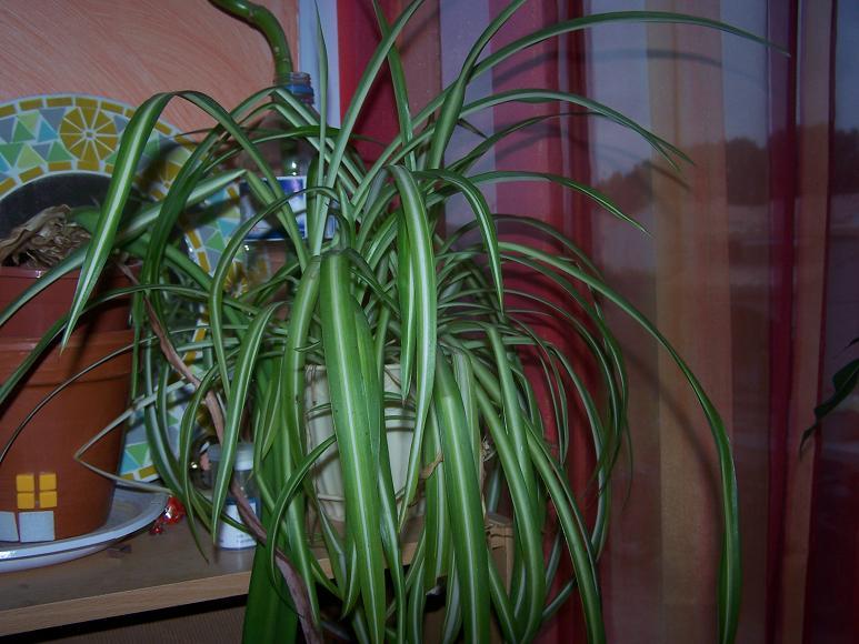 pouvez vous m'aider a identifier mes plantes 100_1913