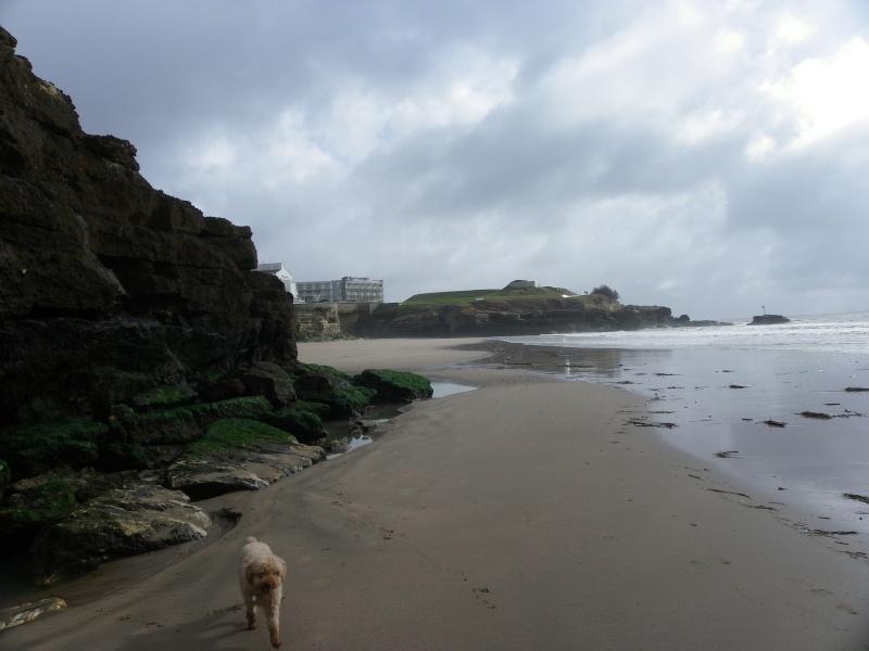 La côte et ses plages entre Royan et Nauzan par le GR4 Imgp5122