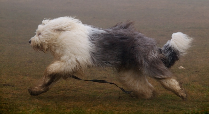 encore les chiens Dogbru12