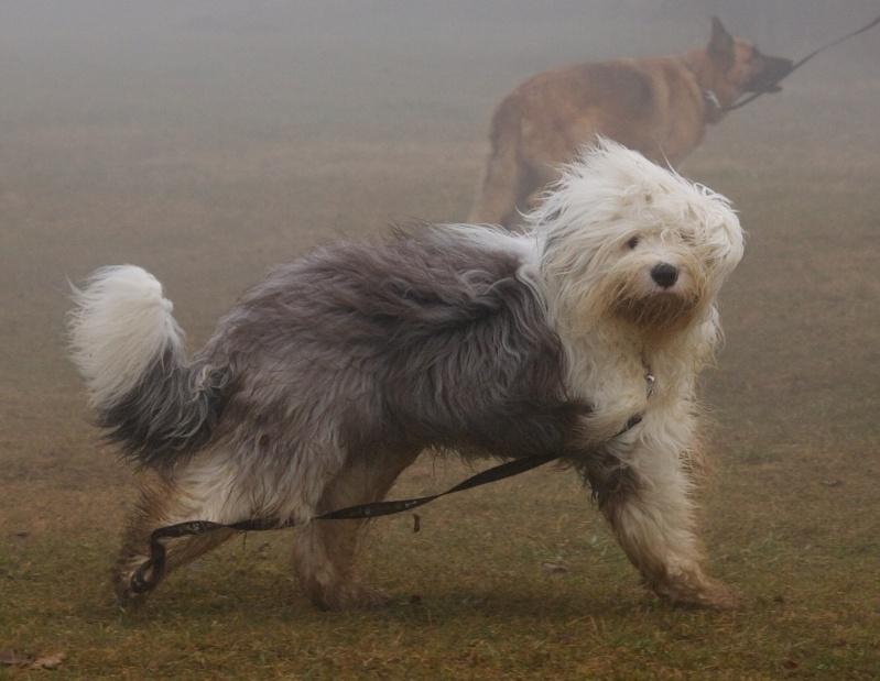 encore les chiens Dogbru14
