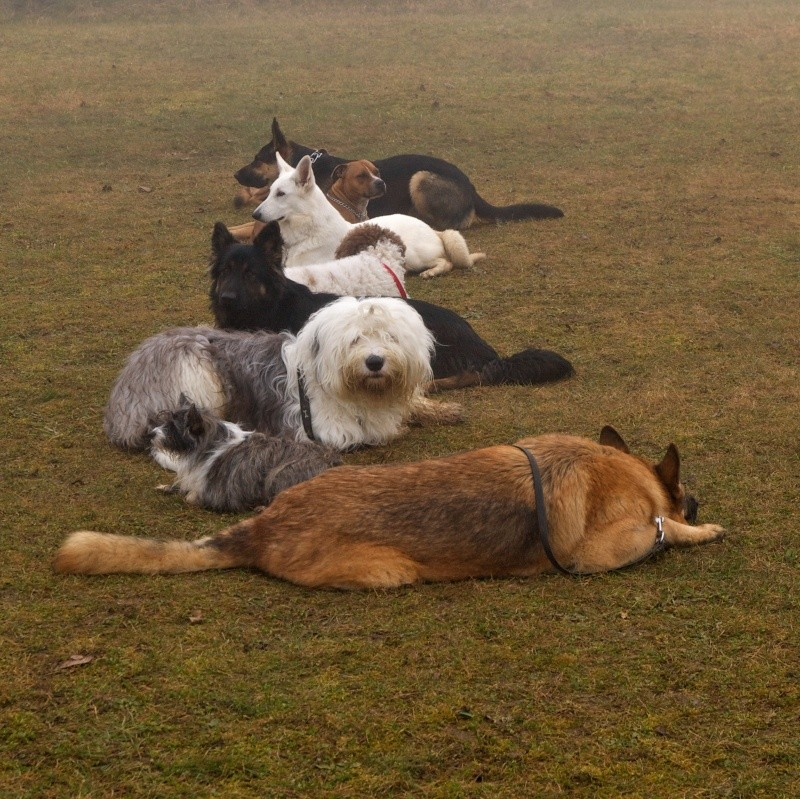 encore les chiens Dogbru15