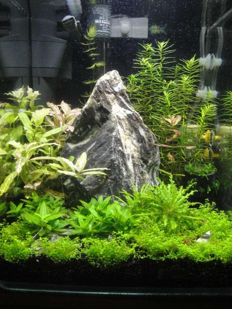 [54L] Création de mon premier bac | Etape 2: Choix des plantes et du décors Dsc03115
